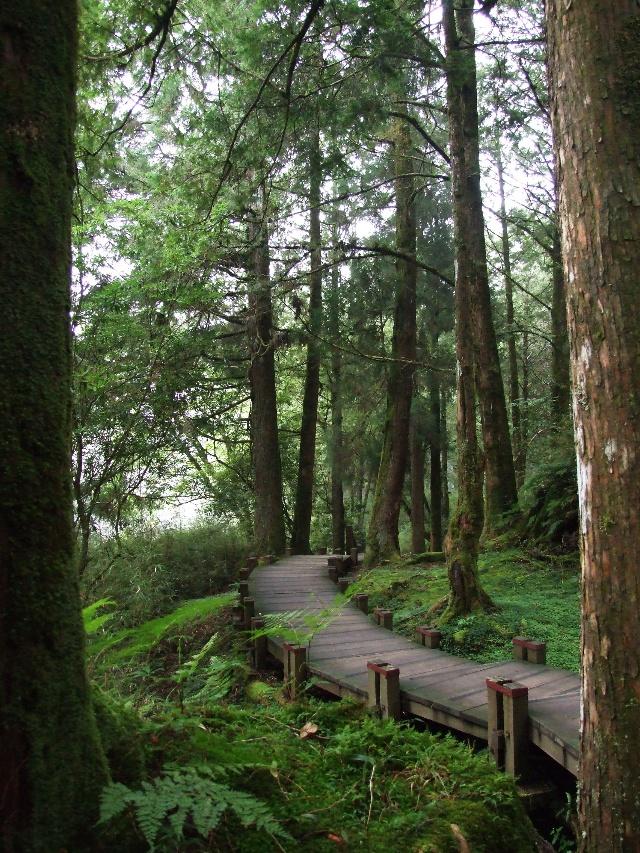 壁纸 风景 森林 桌面 640_853 竖版 竖屏 手机