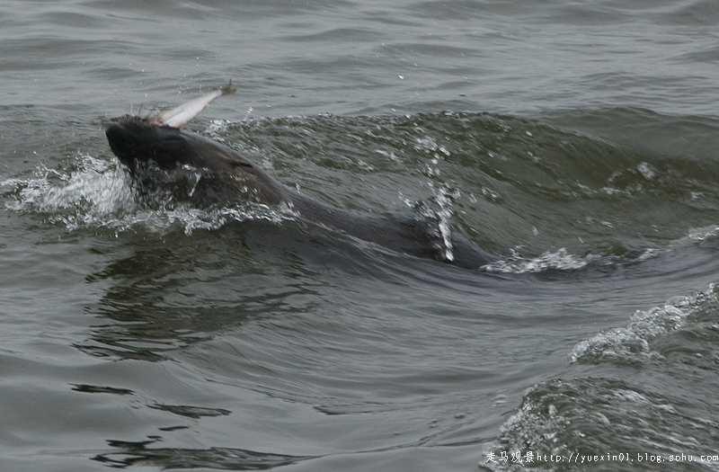 在纳米比亚和海豹亲密接触 - 晓月 - 走马观景