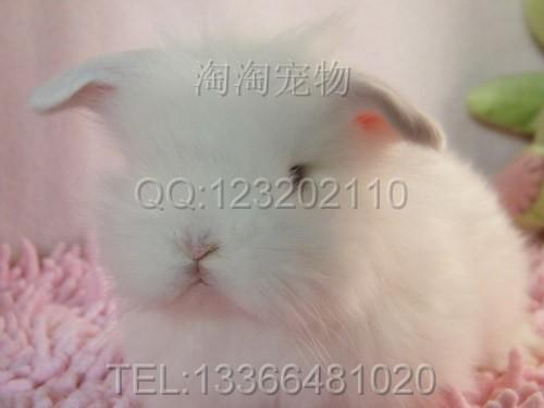 最可爱的小兔子的眼睛