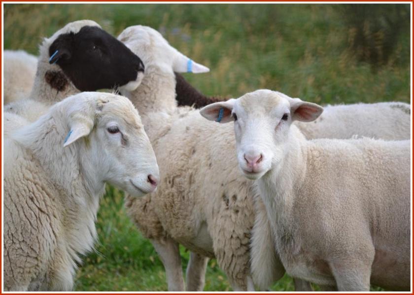 别以为农场上全是家养动物