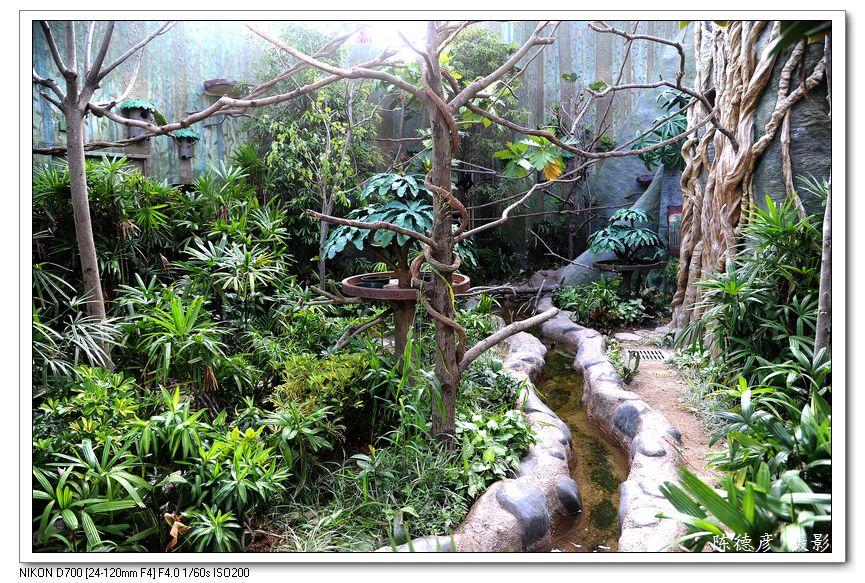 """香港""""热带雨林天地"""""""
