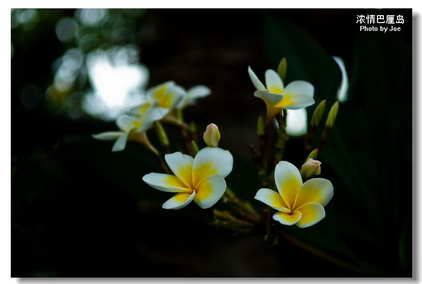 浓情巴厘岛之三:田园风光与艺术宗教完美结合的乌布