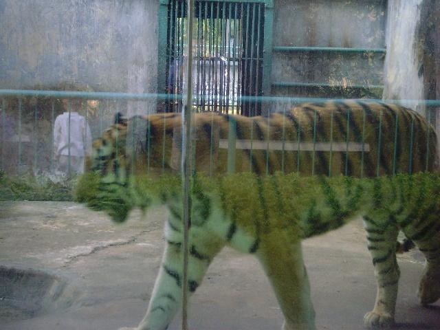 2007年动物园-竹子花-搜狐博客