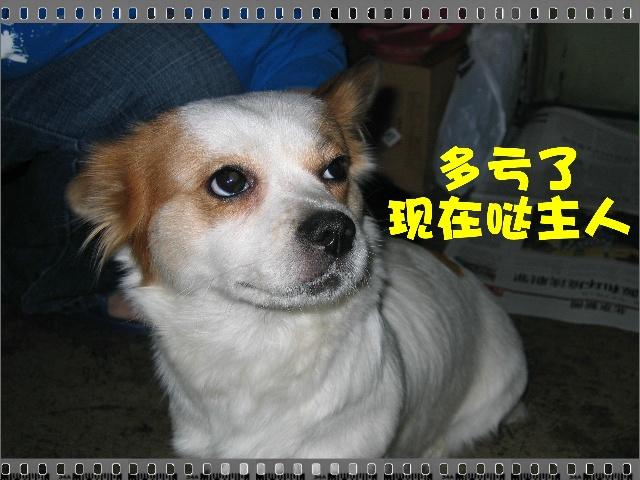 丢丢和豆豆-我是猫妖-搜狐博客