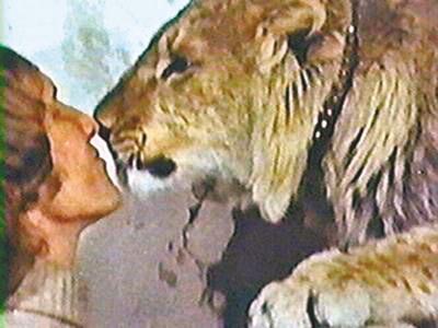 它是一头狮子呀! 这是30年前的纪录片,像质不好却感动着全世界.