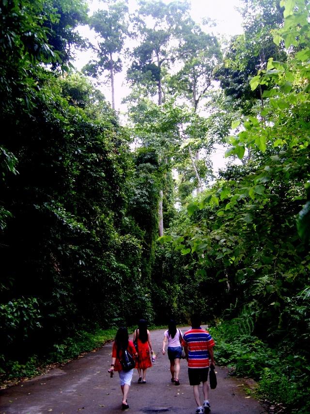 于是阿莲雅成了这片大森林的名词.