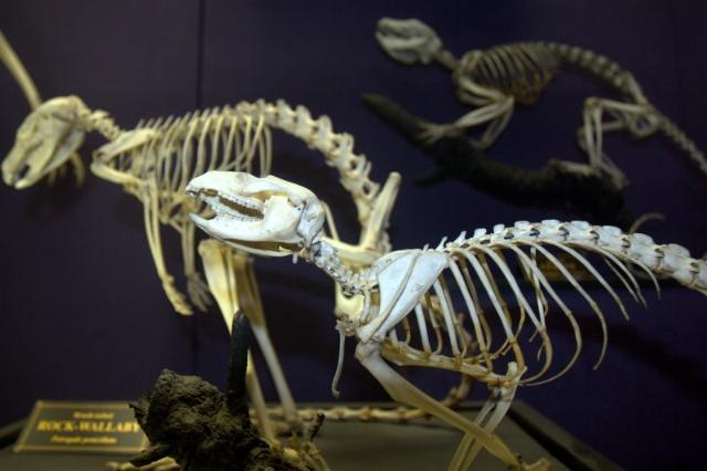 动物 恐龙 640_426