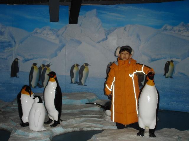 北极动物家园高清图片
