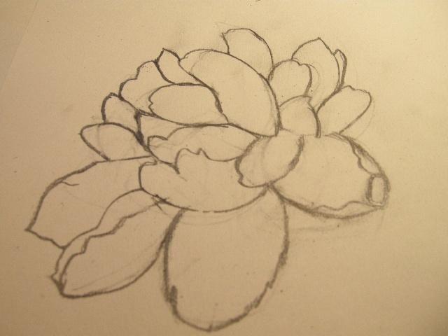 牡丹花手绘彩铅简笔画