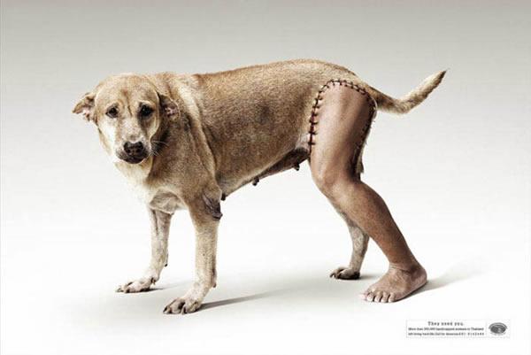 动物环保宣传图片