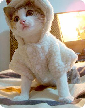 超级无敌可爱的猫猫 - 貂.残魂 - 又一村又一店
