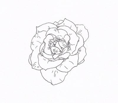 牡丹花-素描