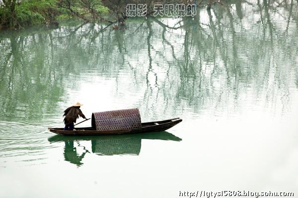 壁纸 垂柳 风景 柳树 摄影 树 桌面 600_400