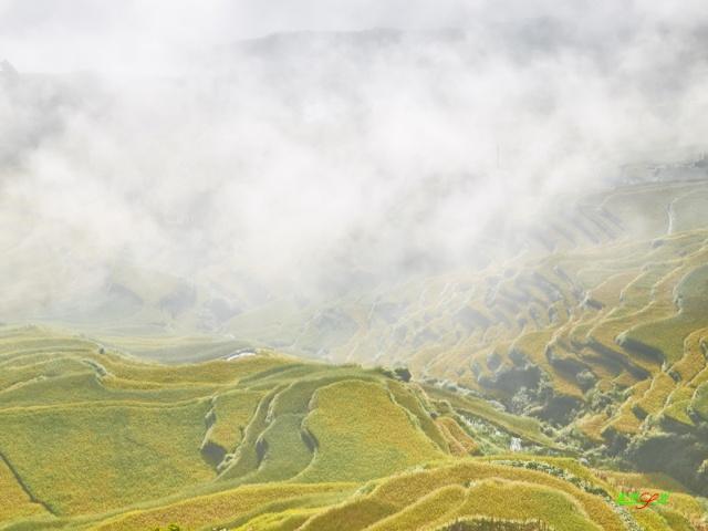 龙脊梯田秋天的美景