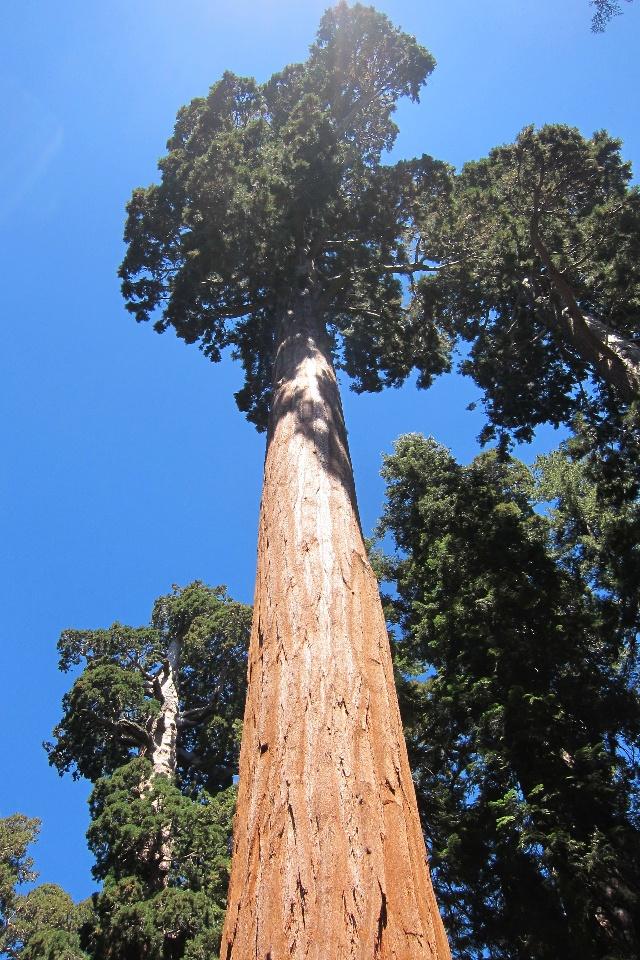 美国红杉树国家公园