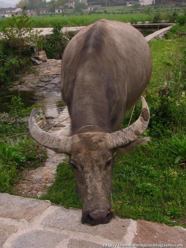 壁纸 犀牛 野生动物 640_853 竖版 竖屏 手机