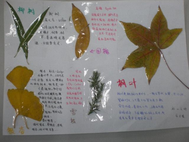 学生活动——搜集秋天的树叶-一席风景-搜狐博客