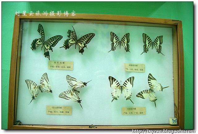 实拍哈尔滨龙塔 黑龙江省广播电视塔 上的美丽蝴蝶