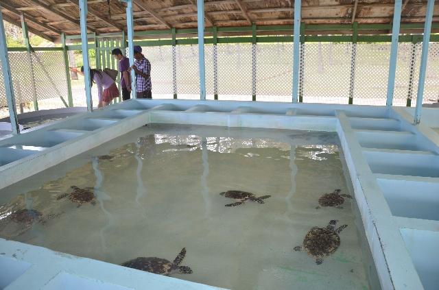 多层龟池设计图图片